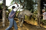 GUEST POST: Why you might not want to ride an elephant, after all!