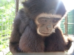 Phuket Monkey School… A Seriously Uncomfortable Experience