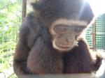 Phuket Monkey School… A Seriously Uncomfortable Experience