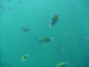 Snorkelling at Phi Phi