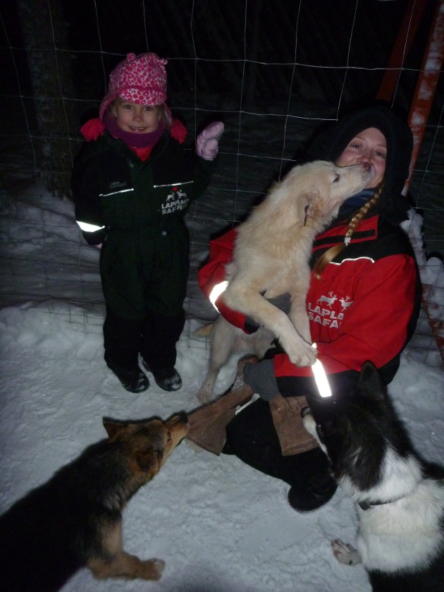 Playful Husky Puppies - One Licking my face, the others stealing my mittens!