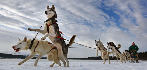 Husky Racing Pack